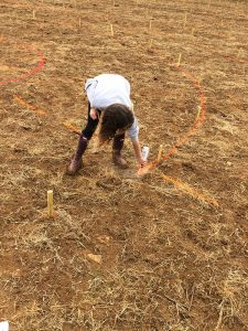marking out the maze